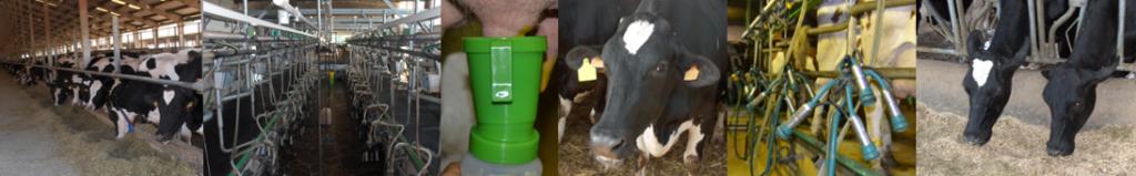 Dairy farms, feeding, udder hygiene and teats dipping